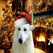 weihnachtsssindo.jpg